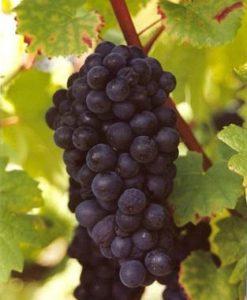 Wereld wijnproefdoos Pinot Noir