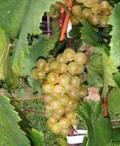 Wereld wijnproefdoos Chardonnay
